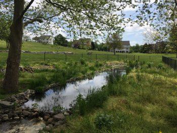 Wetlands at Ricky Park