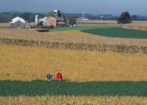 farm photo